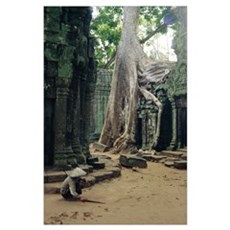 Roots of a kapok tree Poster