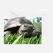 Helaine's Desert Tortoise Greeting Cards (Pk of 10
