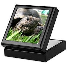 Helaine's Desert Tortoise Keepsake Box