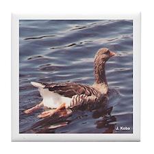 A Goose Swimming (Chatham, NJ)