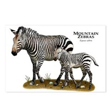 Mountain Zebra and Young Postcards (Package of 8)