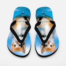 Orange Kitten in Class Flip Flops