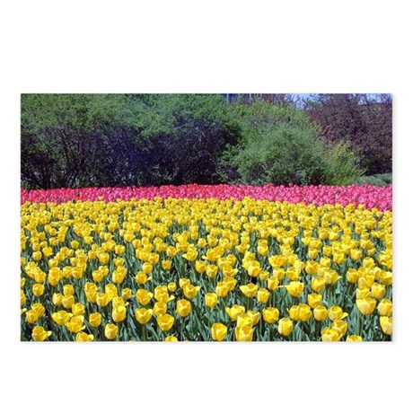 Ottawa Tulips Postcards (Package of 8)