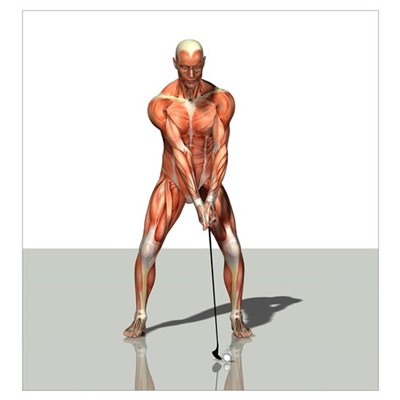 Male muscles, artwork Poster