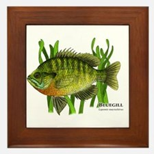 Bluegill Framed Tile