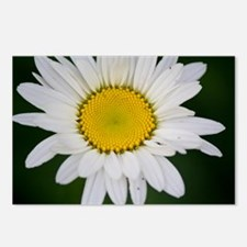 Daisy in the Morning Postcards (Package of 8)