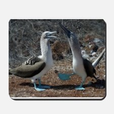 Blue-footed booby Mousepad  - boobie boobies
