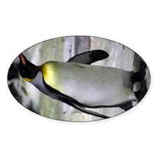 King Penguin 5 Decal