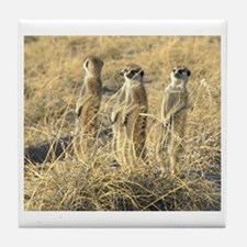 Four Meerkats Tile Coaster