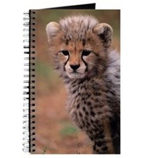 Cheetah cub, Masai Mara National Reserve - Journal
