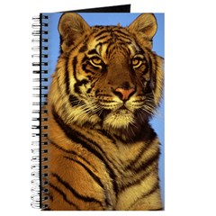 Tiger - Journal