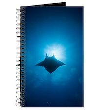 Manta swimming underwater, low angle view - Journa