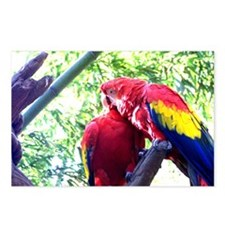 Scarlet Macaws Postcards (Package of 8)