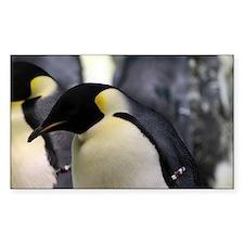 Emperor Penguins 5 Decal