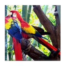 Funny Scarlet macaw Tile Coaster