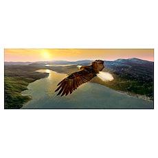 Bald eagle in flight, artwork Poster