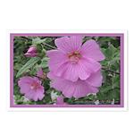 Fe's Pink Malva Postcards (Package of 8)
