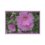 Fe's Pink Malva Rectangle Magnet (10 pack)