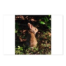 Baby Bunny Postcards (Package of 8)