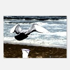 Sea Gull Postcards (Package of 8)