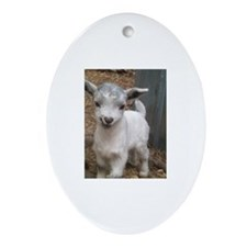 Fainting Goat Ornament (Oval) #5