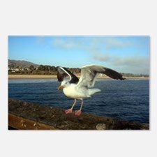 Sea Gull with its wings out Postcards (Package of