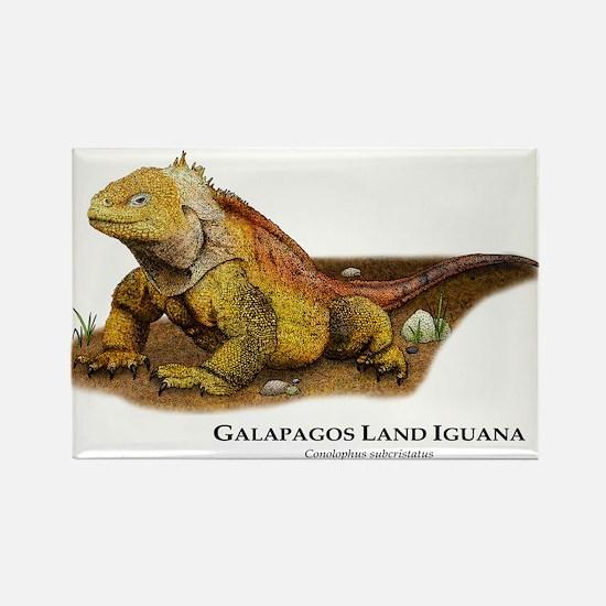 Galapagos Land Iguana Rectangle Magnet
