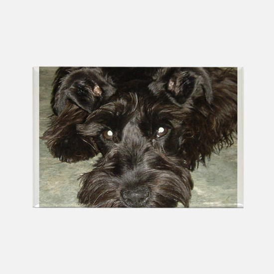 Cute Black miniature schnauzer Rectangle Magnet