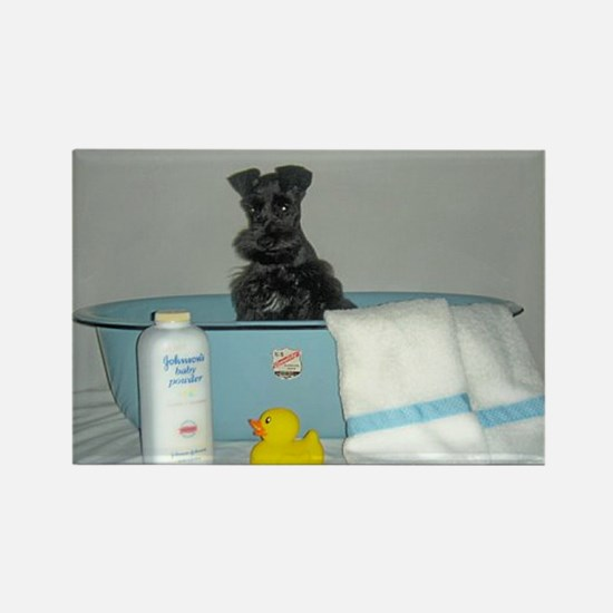 Funny Black miniature schnauzer Rectangle Magnet