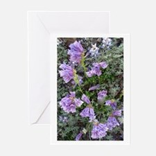 Penstemon Greeting Cards (Pk of 10)