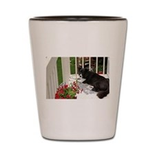 Border Collie Madness Shot Glass