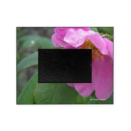 Alaska Wild Rose Picture Frame
