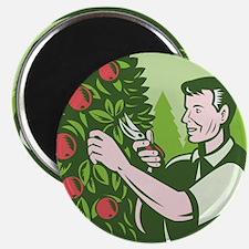 Horticulturist Farmer Pruning Fruit Magnet