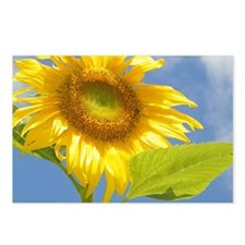 BACKYARD SUNFLOWER Postcards (Package of 8)
