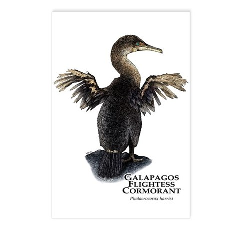 Galapagos Flightless Cormorant Postcards (Package