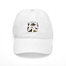 Animals of the Galapagos Islands Baseball Cap