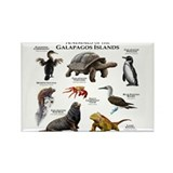 Galapagos islands Magnets