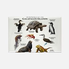 Animals of the Galapagos Islands Rectangle Magnet
