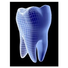 Molar tooth Poster