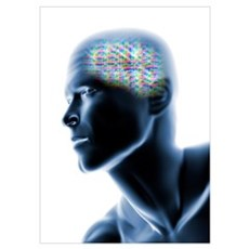 Human head with EEG brainwaves Poster