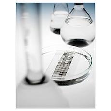 DNA autoradiogram Poster