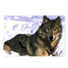Alpha Wolf Postcards (Package of 8)