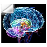 Brain Wall Decals