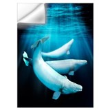 Beluga whale Wall Decals