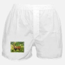 deer in a beautiful setting Boxer Shorts