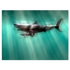 Megalodon shark and great white Canvas Art