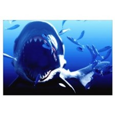 Megalodon prehistoric shark