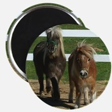 Cute Miniature Horses Magnet