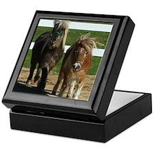 Cute Miniature Horses Keepsake Box