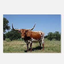 Longhorn cow Postcards (Package of 8)